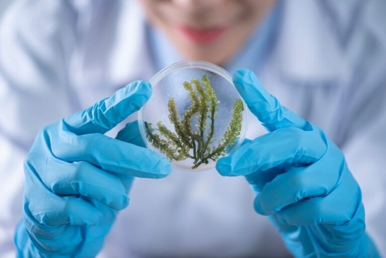 ENvironmental scientist resume examples show tasks done in a lab holding a petri dish